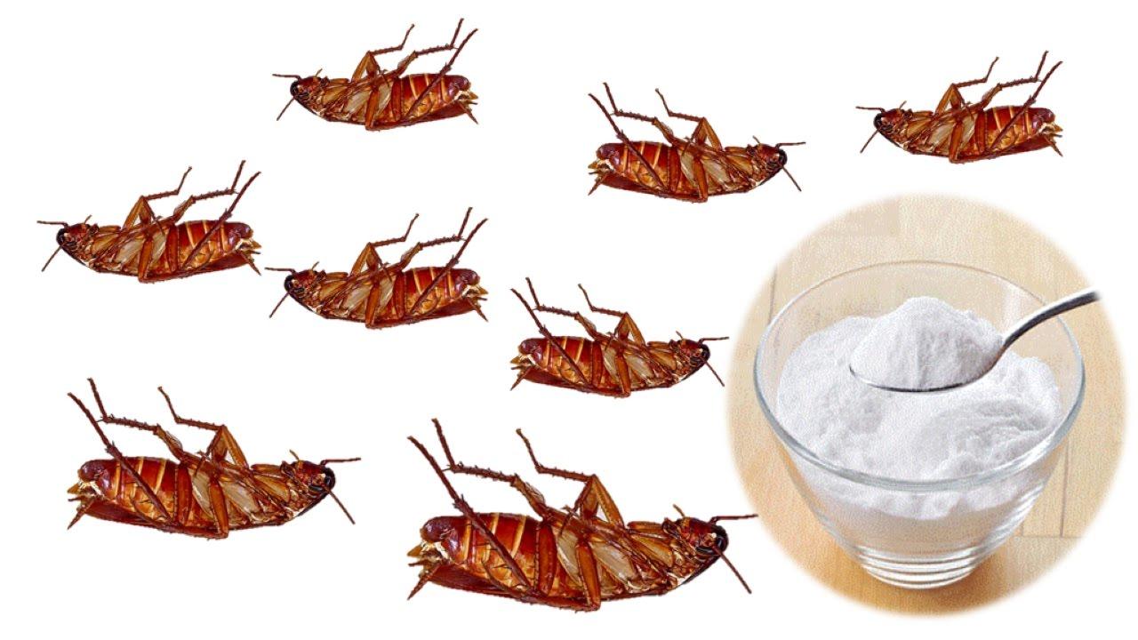 طرق التخلص من الصراصير المنزلية في المطبخ