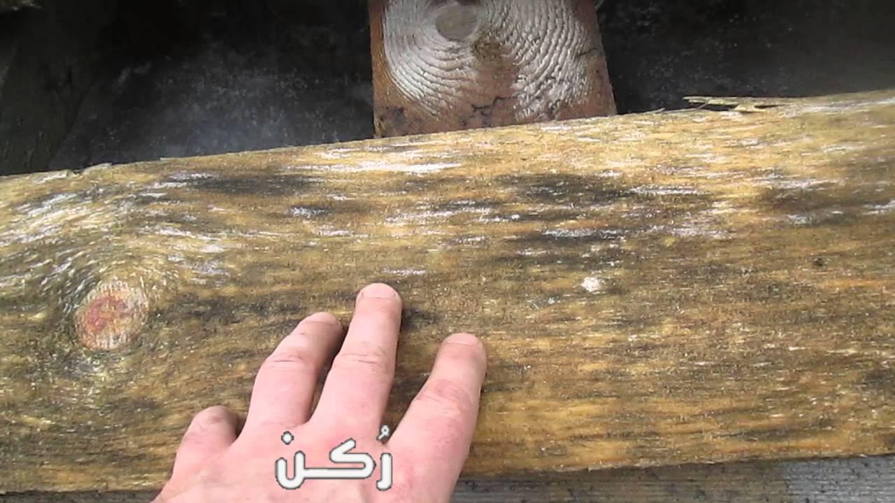 طريقة التخلص من عفن الخشب