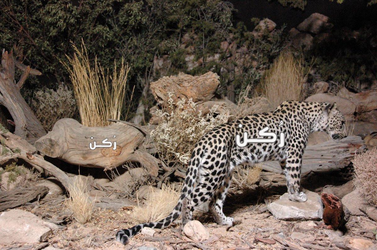 سياحة زيارة ورؤية الحيوانات المهددة بالانقراض حول العالم