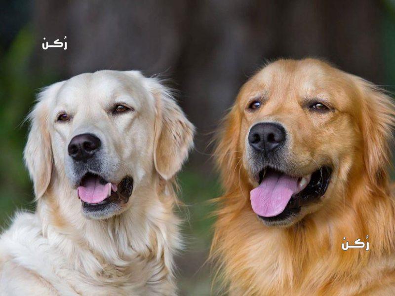 تفسير حلم الكلاب في المنام للمتزوجة والعزباء والرجل