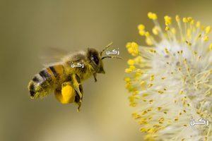 طريقة التخلص من خلية النحل خطوة بخطوة