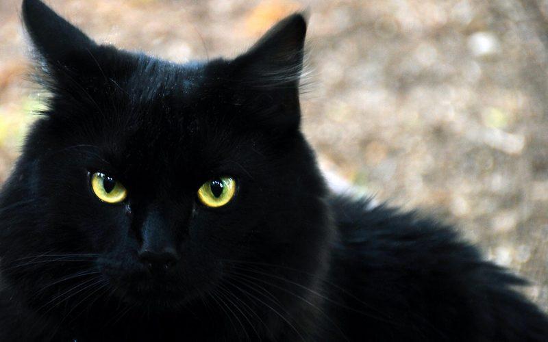 تفسير حلم رؤية القطط في المنام لابن سيرين والنابلسي