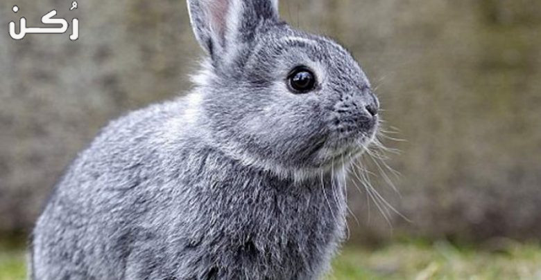 تفسير حلم رؤية الأرنب في المنام للمرأة والرجل