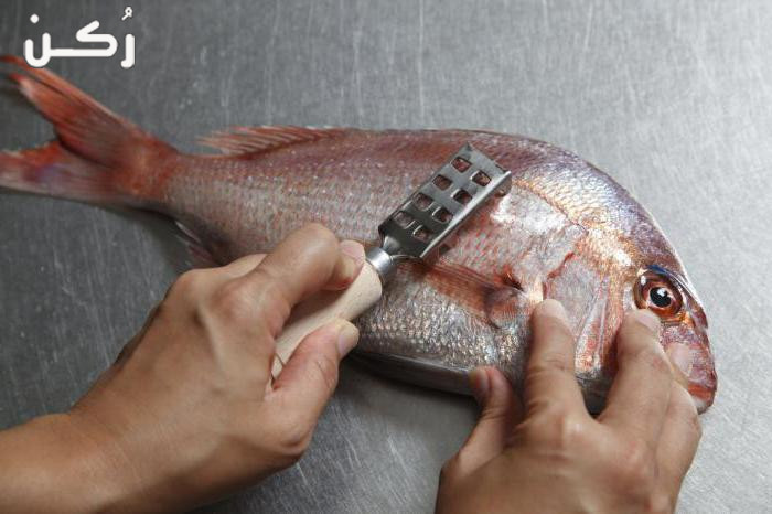 كيف أختار السمك الطازج والطريقة السليمة لتنظيف الأسماك