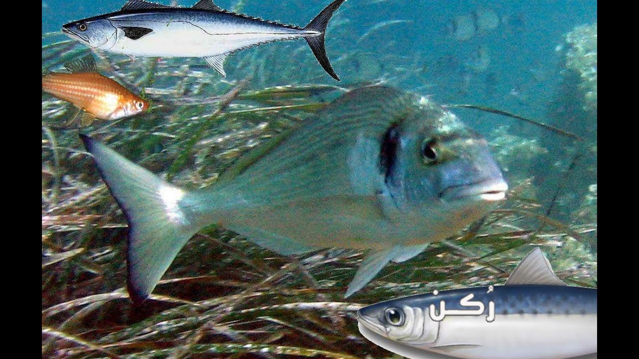 أشهر أسماك البحر الأبيض المتوسط في مصر