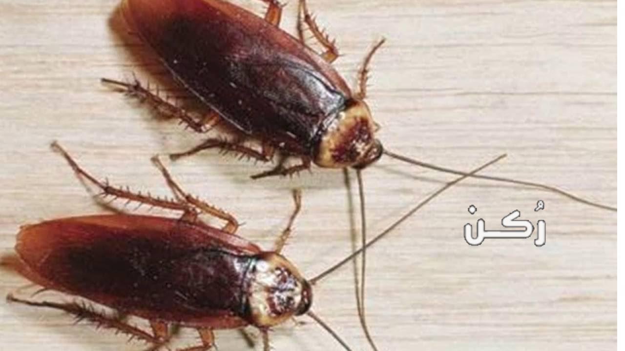 تفسير رؤية الصراصير في الحلم لابن سيرين والنابلسي