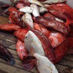 أشهر أسماك البحر الأحمر وسبب تسمية البحر بالأحمر
