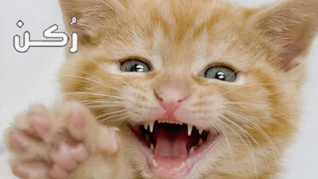 طرق حماية أثاث المنزل من خربشة القطط