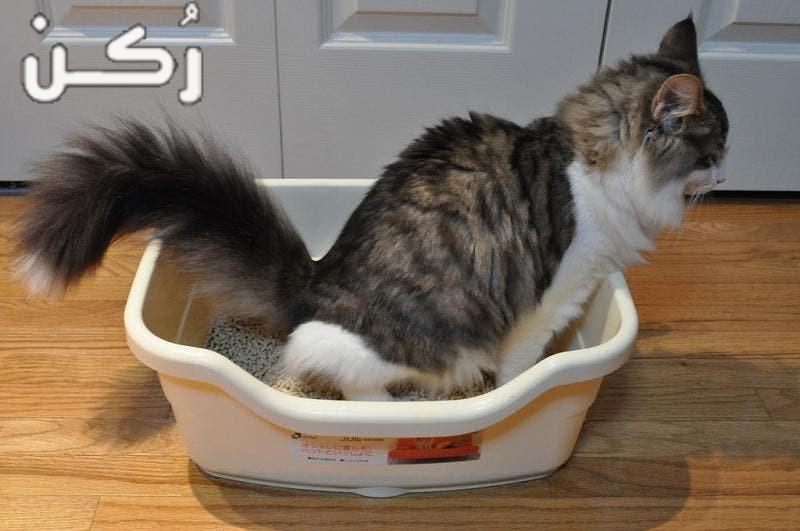 معلومات عن تربية القطط والعناية بها للمبتدئين