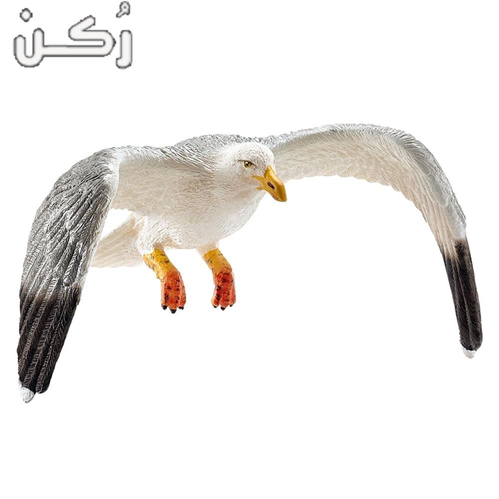 معلومات عن طائر النورس للاطفال والكبار