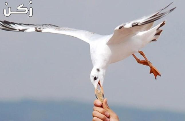 تفسير حلم رؤية طائر النورس