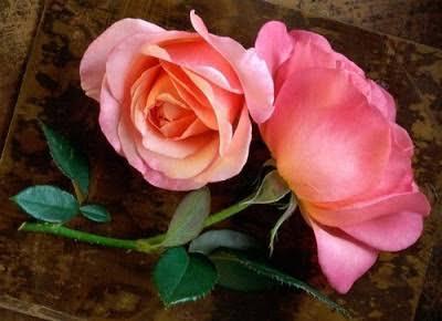 ألوان الورد الهاديه