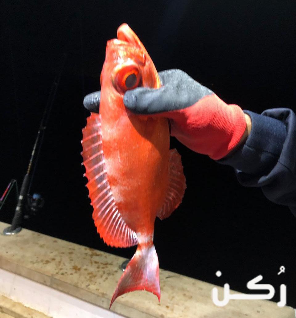 تفسير رؤية صيد الأسماك باليد أو الصنارة في الحلم