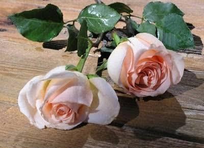 أزهار رومانسية وجميلة