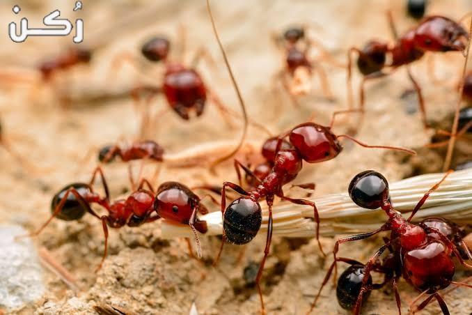 تفسير حلم النمل في المنام للمتزوجة والعزباء والرجل