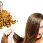 فوائد زيت الحلبة لتطويل الشعر وتغذية فروة الرأس مجرب