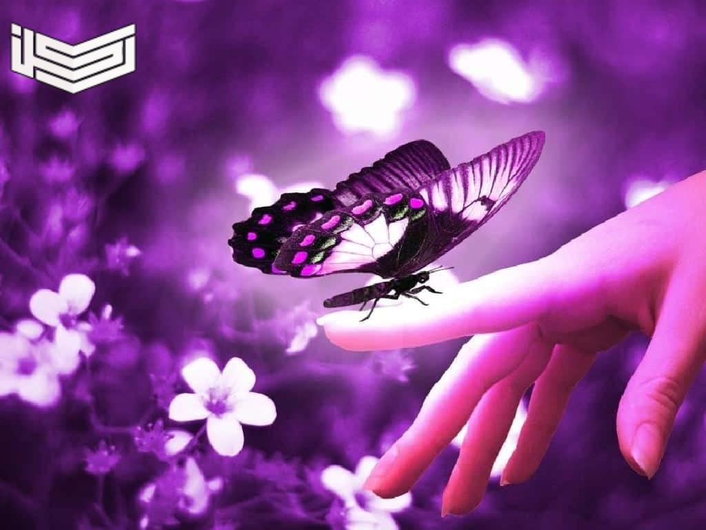 تفسير حلم رؤية الفراشة في المنام للرجل والعزباء والحامل
