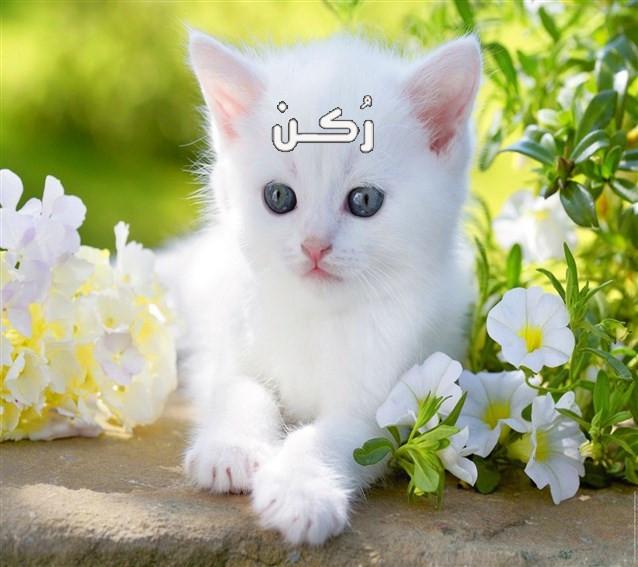 تفسير حلم رؤية القطة البيضاء في المنام للعزباء والمتزوجة والرجل