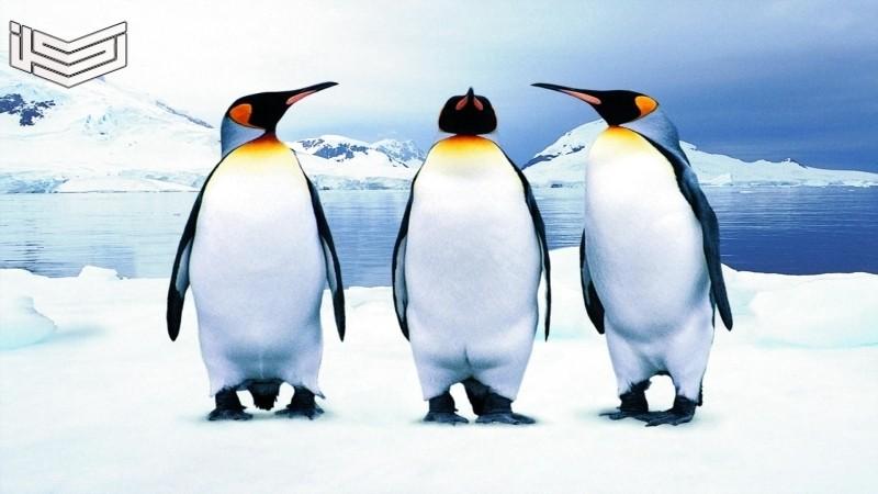 تفسير حلم رؤية البطريق في المنام لابن سيرين