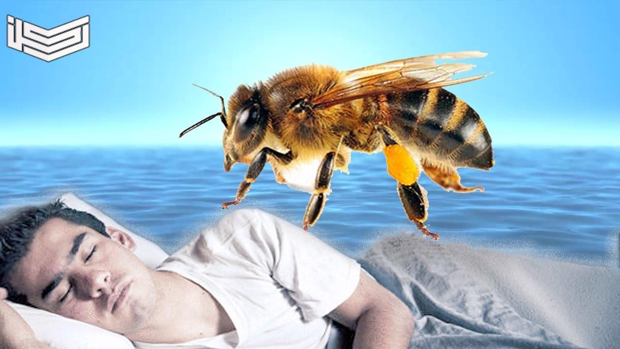 تفسير حلم رؤية النحل في المنام لابن سيرين