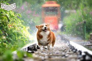 تفسير رؤية نباح الكلب في المنام بحسب الحالة الاجتماعية للرائي