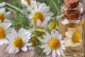 وصفات زيت الكاموميل والزيوت الطبيعية للعناية ببشرة الجسم