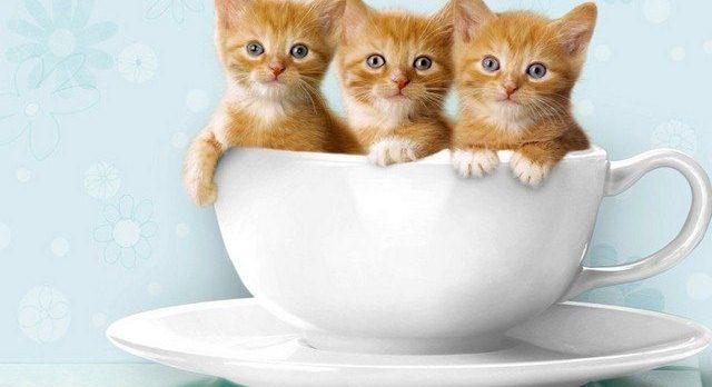 صور قطط جميلة 2020