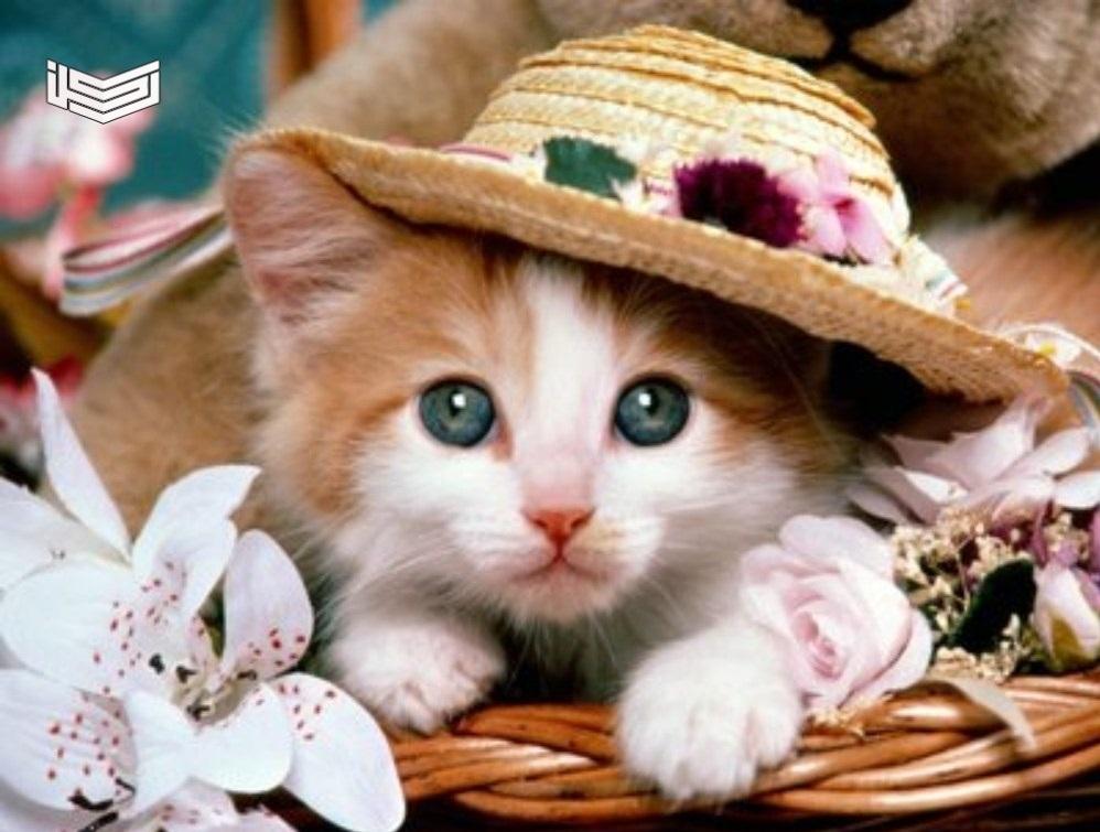 صور قطط جميلة 2020 خلفيات رمزيات القطط كيوت روعة