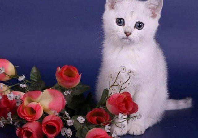 خلفيات رمزيات القطط كيوت روعة